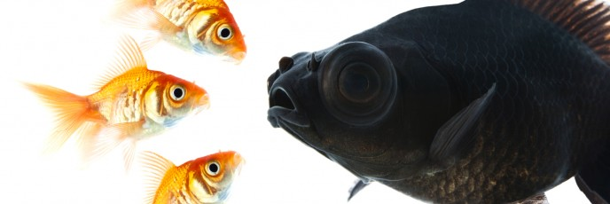 Stand out in the marketing pond.